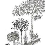 PolyculturePerennials