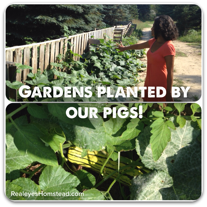 gardens planted by our pigs