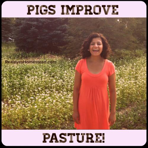 pigs improve pasture