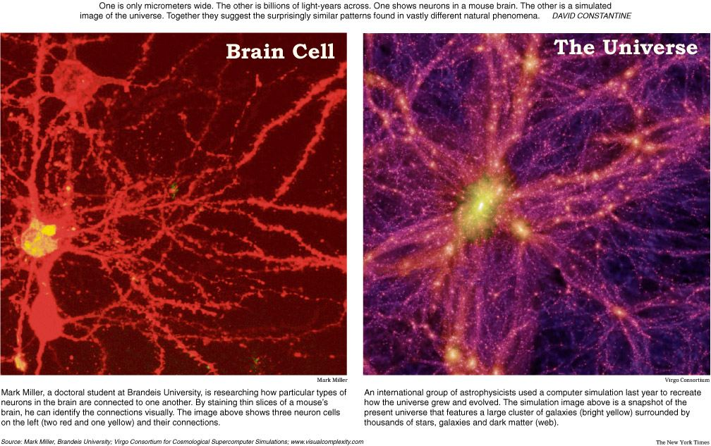 Nutrition & Neuron Communication