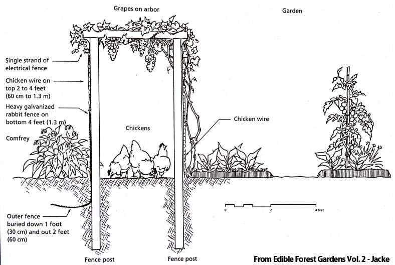 chicken moat permaculture