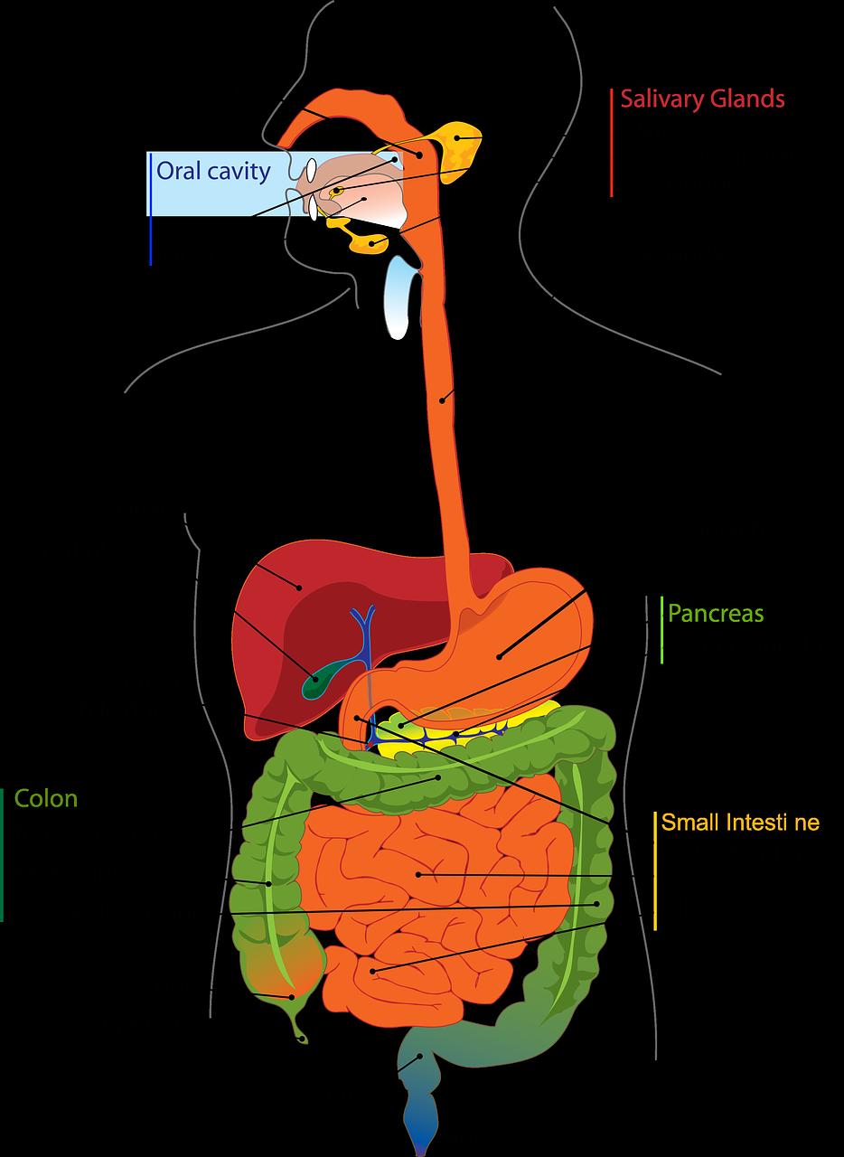 Holistic health focuses on digestion