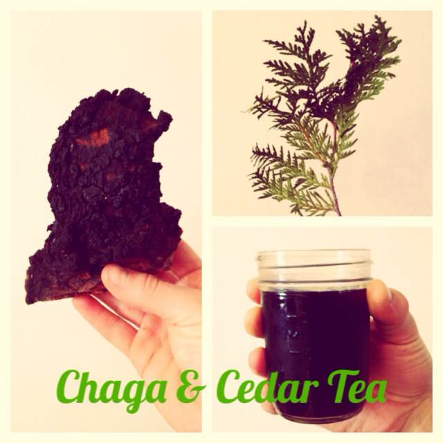 How to Find Chaga Mushrooms & Make Chaga Tea