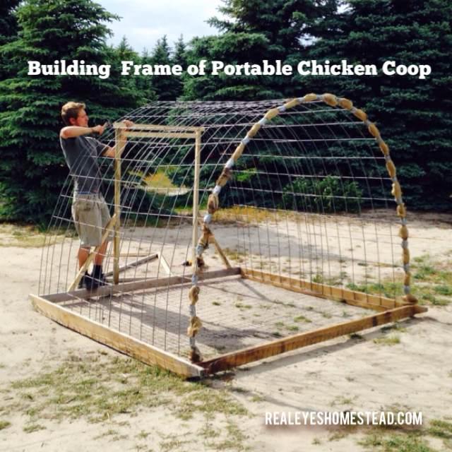 How To Build A Chicken Tractor Quot Hoop Coop Quot Realeyes