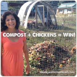 How to Feed Chickens Using Compost (Food Waste)