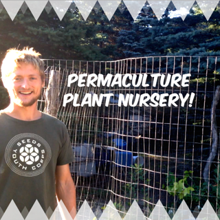 How We Made a Permaculture Plant Nursery