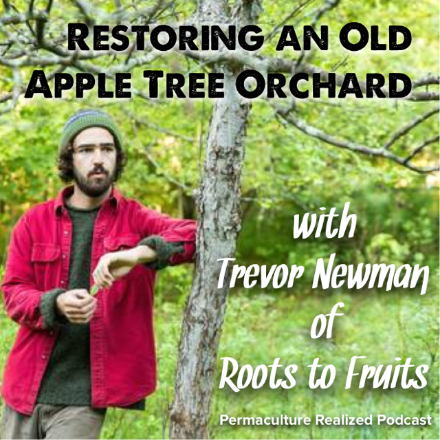 Permaculture Realized Podcast Episode 3, Restoring an Old Apple Tree Orchard and a Sip of Hard Cider with Trevor Newman