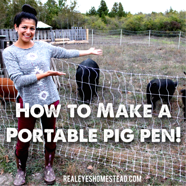 How to Make a Portable Pig Pen - Realeyes Permaculture ...